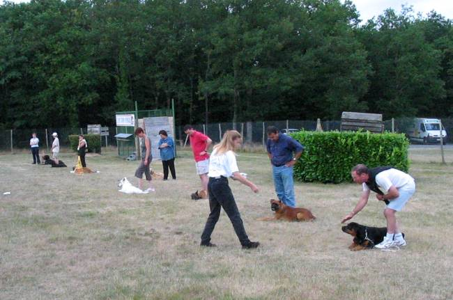 Education au Club canin Yonnais