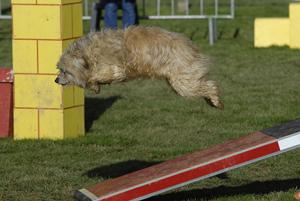 Agility au Club Canin Yonnais en avril 2010
